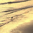 OYSTERCATCHER CATCHES THE WAVES by gothgirl
