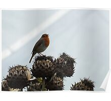 Eden Project Robin Poster