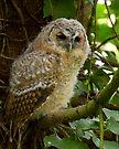 Tawny Owl Fledgling by Neil Bygrave (NATURELENS)