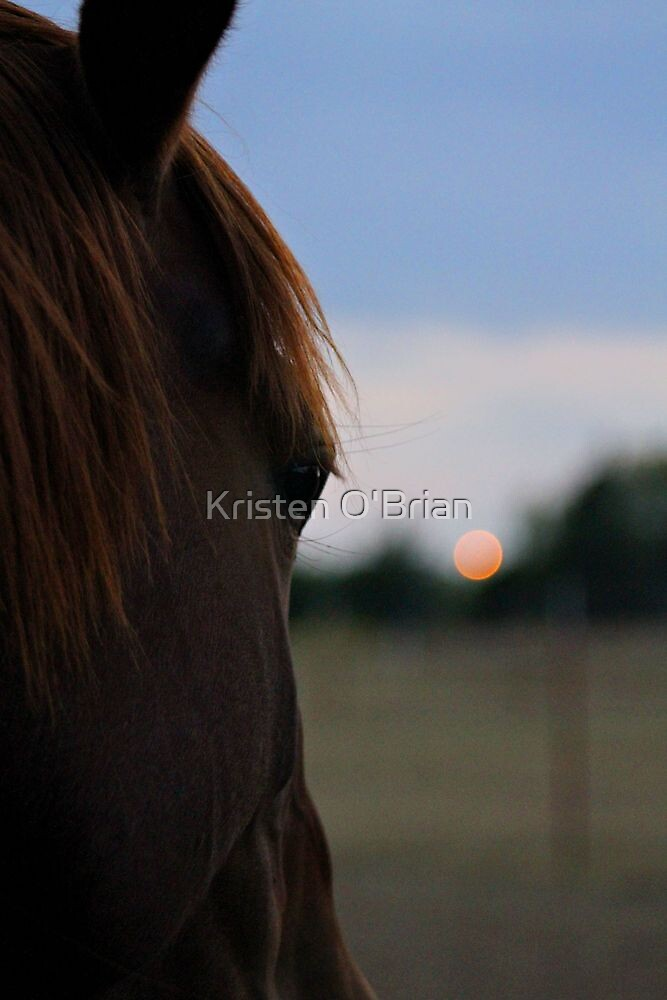 From A Horse's View by Kristen O'Brian