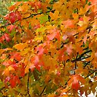 Wet Autumn Leaves by lorilee