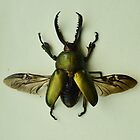 Lamprima Adolphinae - Iridescent Beetle by Jessica Reilly