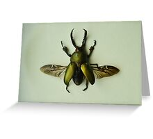 Lamprima Adolphinae - Iridescent Beetle Greeting Card
