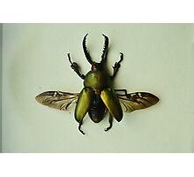 Lamprima Adolphinae - Iridescent Beetle Photographic Print