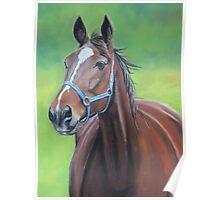Hanover Horse Poster