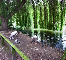 UNDER THE WILLOW TREE. by ronsaunders47