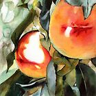 Peaches by Elaine Frenett