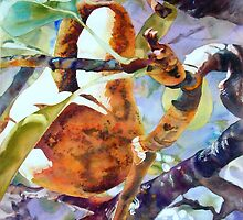 Pears Sundrenched by Elaine Frenett