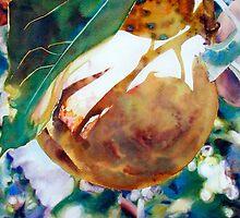 Pears Sunkissed by Elaine Frenett