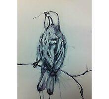 Inky Sparrow Photographic Print