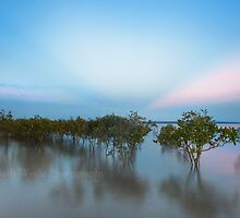 Dusk Amongst the Mangroves - Cleveland Qld Australia by Beth  Wode