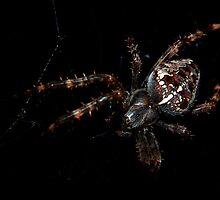 Orb Weaver (7649) by sensameleon