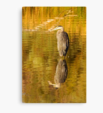 Reflective Great Blue Heron Canvas Print