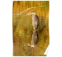 Reflective Great Blue Heron Poster