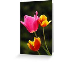 Pink, Orange & Yellow Tulips Greeting Card
