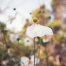 Spring Haze by Josie Eldred