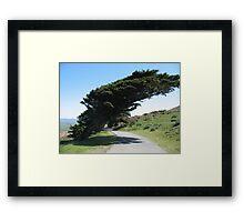Point Reyes Wind Blown Trees Framed Print