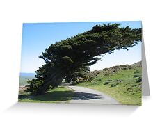 Point Reyes Wind Blown Trees Greeting Card