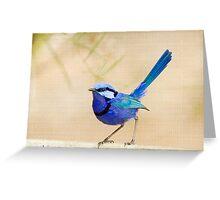 Splendid Fairy Wren (Malurus splendens) Greeting Card