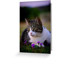 Spring Kitty Greeting Card
