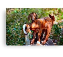 Kidding Around - Double Trouble Canvas Print