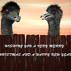 EMUS AT CHRISTMAS TIME by jansimpressions