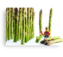 Asparagus Harvest Canvas Print