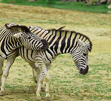 Everybody was Zebra Fighting by liberthine01