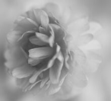 A flower of delicate grey chiffon by Karen Eaton