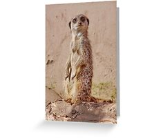 Who are You Looking AT ??? Greeting Card
