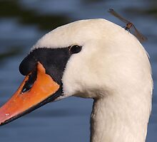Swan with Dragonfly on its head  by Tim  Preston