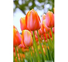 A Fun Day With the Tulips at the Floriade 2013 Photographic Print