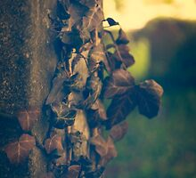 Autumn in Graveyards by Nicola Smith