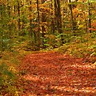 A path through the fall colors by DArthurBrown