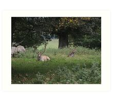 Two Stags (Dinefwr Deer Park) Art Print
