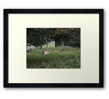 Two Stags (Dinefwr Deer Park) Framed Print