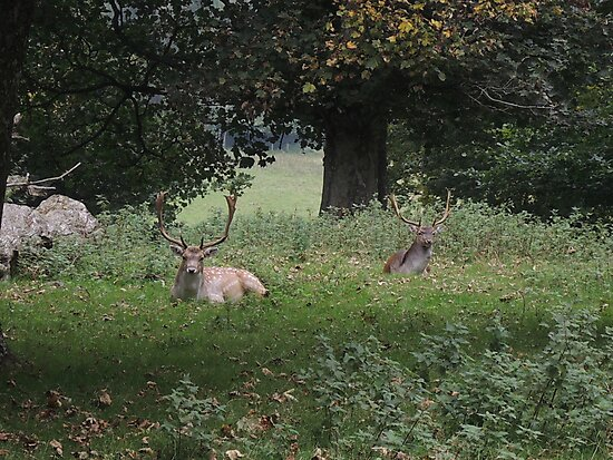 Two Stags (Dinefwr Deer Park) by CreativeEm
