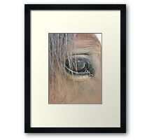 Trust the Animal and He will Trust You Framed Print
