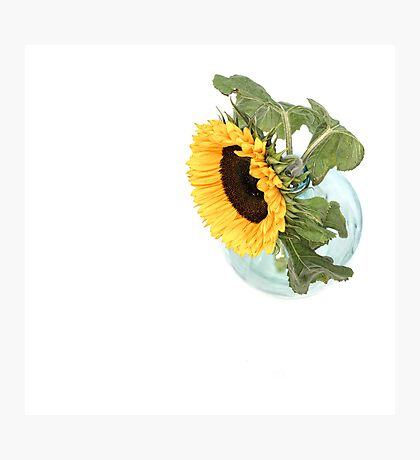 Sunflower in a Vase.... Photographic Print
