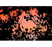 pink sky through trees Photographic Print