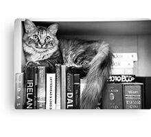 Bookshelf Kitten Canvas Print