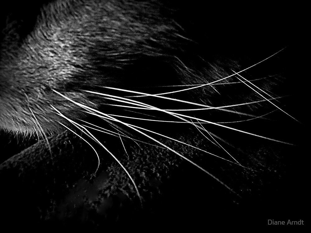 Whiskers in Noir and Blanc by Diane Arndt