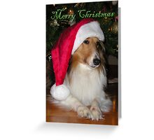 Merry Christmas Sheltie Greeting Card