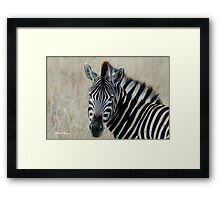 IN PORTRAIT THE BURCHELL'S ZEBRA – Equus burchelli – Bontkwagga Framed Print