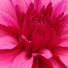 Big pink flower by bardenne