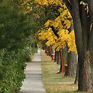 Transcona Sidewalk in Fall by Stephen Thomas