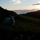 Early morning Encounter on Skye by Richard Flint