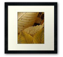 Golden Elm Leaves Framed Print