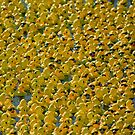 Rubber Ducky, You're the ONE??? by Russell Fry