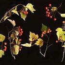 Autumnal Hawthorn by Barbara Wyeth